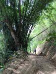 IMG-20190709-WA0047 -best trail pic